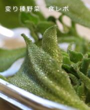 変り種野菜 口コミ